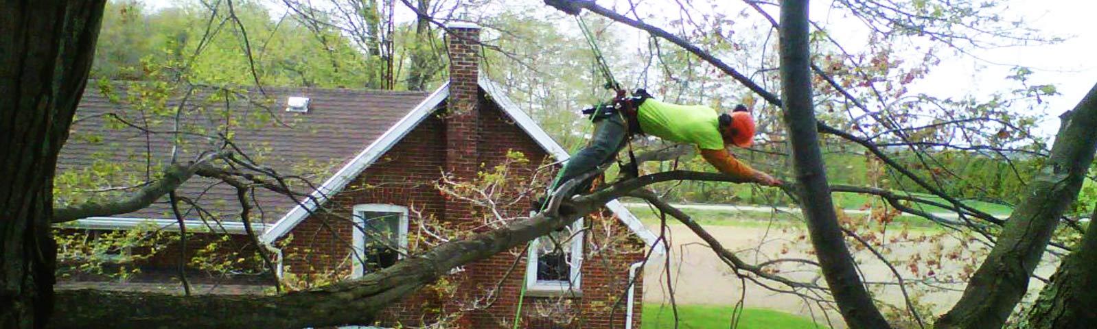 tree-maintenance.jpg